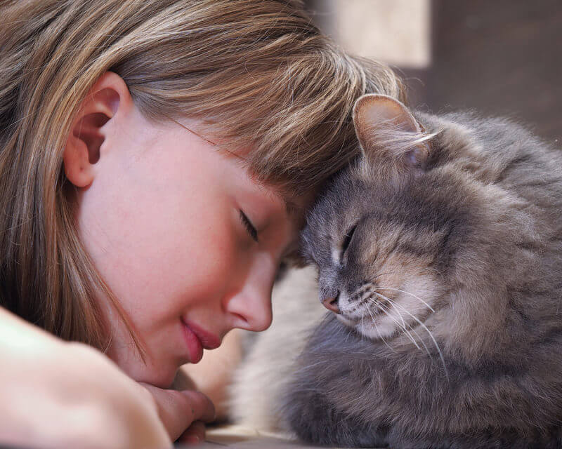 Cat and girl nose to nose: autism dream job